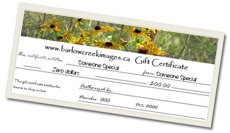 Gift Certificates - Barlow Creek Studio